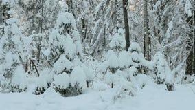 Mnóstwo śnieg na drzewach zdjęcie wideo
