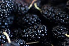 Mnóstwo Blackberry, czarne jagody, witaminy jedzenie Fotografia Royalty Free