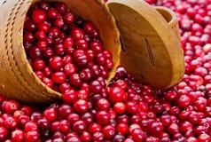 Mnóstwo cranberry i dżem z cranberry Fotografia Stock