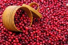 Mnóstwo cranberry z wiązu drewnem Zdjęcia Royalty Free