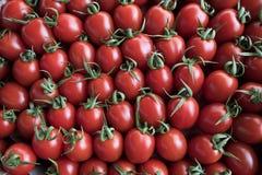 Mnóstwo czerwoni pomidory w sklepie Obrazy Stock