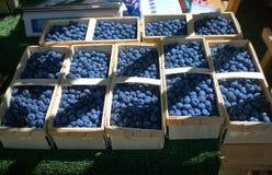 Mnóstwo kosze z uprawiać ziemię błękitnymi jagodami na rynku fotografia stock