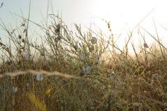 Mnóstwo ślimaczki na suchej trawie Zdjęcie Royalty Free