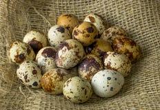 Mnóstwo przepiórek jajka dla malować kłamać na drewnianym stole zakrywającym z burlap Fotografia Stock