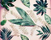 Mnóstwo różnorodny drzewko palmowe opuszcza na pastelowych menchii tle, odgórny widok fotografia royalty free