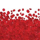 Mnóstwo rewolucjonistki róży płatki odizolowywali - wektor, ilustrator Obrazy Stock