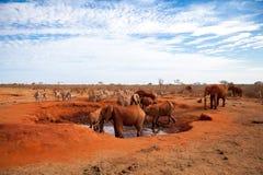 Mnóstwo słonie na waterhole fotografia royalty free