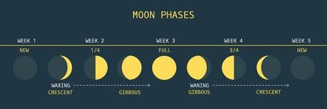 Månefaser Arkivfoto
