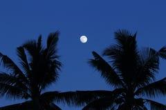 Månen mellan skugga av kokospalmen Arkivbild