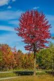 Mång--färgad träd och blå himmel Arkivbild
