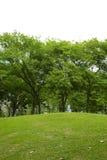 Många träd och liten kulle Arkivbilder