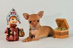 Mniature Russkiy玩具与Matryoshka的狗小狗 库存照片