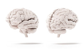 Människahjärna Arkivbilder