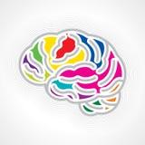 Människahjärna Arkivbild