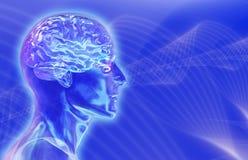 Männlicher Glaskopf mit Gehirn auf Brainwaves-Hintergrund Lizenzfreie Stockbilder