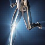 Mänsklig bild för benröntgenfotograferingbildläsning Arkivfoto