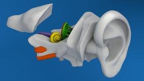 Mänsklig öraanatomi Arkivbild