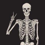 Mänskligt posera för skelett som isoleras över svart bakgrundsvektor Royaltyfria Bilder
