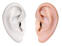 Mänskligt öra. Arkivbilder