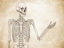 Mänskligt skelett- posera över gammal vektor för grungepappersbakgrund Arkivbilder