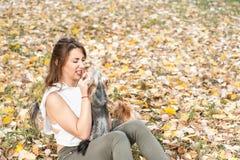 Moça bonita com seu cachorrinho do cão do yorkshire terrier que aprecia e que joga no dia do outono no foco seletivo do parque fotografia de stock royalty free