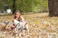 Moça bonita com seu cachorrinho do cão do yorkshire terrier que aprecia e que joga no dia do outono no foco seletivo do parque foto de stock royalty free