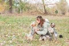 Moça bonita com seu cachorrinho do cão do yorkshire terrier que aprecia e que joga no dia do outono no foco seletivo do parque fotografia de stock