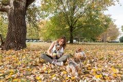 Moça bonita com seu cachorrinho do cão do yorkshire terrier que aprecia e que joga no dia do outono no foco seletivo do parque foto de stock