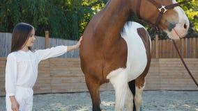 A moça bonita vem ao cavalo e a acariciá-lo no hipódromo vídeos de arquivo