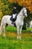 Moça com o cavalo branco do adestramento Imagens de Stock Royalty Free