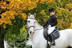 Moça com o cavalo branco do adestramento Imagens de Stock
