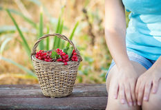 Moça com uma cesta do Viburnum Fotografia de Stock Royalty Free