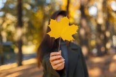 A moça em um revestimento realiza em suas mãos uma folha amarela do outono no parque em um dia morno da queda Folha de bordo dour imagens de stock