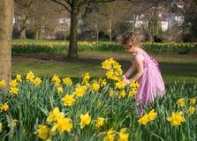Moça em um vestido consideravelmente cor-de-rosa que guarda um grupo dos narcisos amarelos imagens de stock