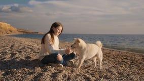 A moça em uma camiseta branca treina seu cachorrinho macio do inu do shiba na costa de mar e alimenta-o durante o tempo do nascer video estoque