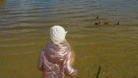 A moça que alimenta patos no lago no parque do outono empurra a vista filme