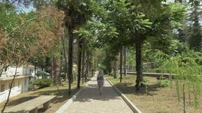 Moça que anda ao longo da aleia da palma Jardim botânico de Batumi, Geórgia filme