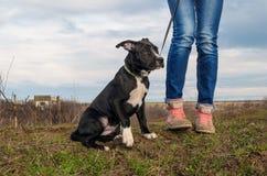 Moça que anda com o cão de cachorrinho no campo de grama Fotografia de Stock Royalty Free