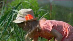 Moça que escolhe morangos no jardim video estoque