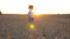 A moça que guarda o trigo desengaça à disposição e movimentando-se com seu cão de puxar trenós siberian na trela através do prado vídeos de arquivo