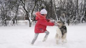 Moça que joga com o cão do malamute do cão de puxar trenós siberian na neve fora no movimento lento filme