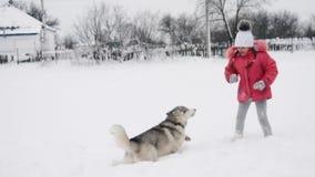 Moça que joga com o cão do malamute do cão de puxar trenós siberian na neve fora no movimento lento vídeos de arquivo