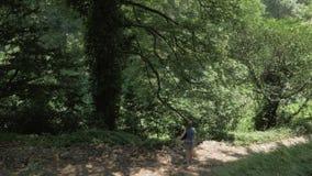Moça que olha a árvore grande na floresta tropical Geórgia vídeos de arquivo