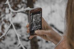 Moça que toma imagens da natureza do inverno com telefone celular fotografia de stock royalty free