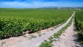 Moët & Chandon vineyards in Verzenay, Champagne, France Stock Photography