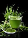 Moździerz z świeżym ziele d zdjęcie royalty free