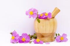 Moździerza i menchii dzikich kwiatów ziele od Grecja odizolowywali w białym tle zdjęcia stock