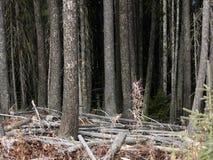 może cię widzieć las Zdjęcia Royalty Free
