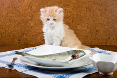 może jeść i Fotografia Stock