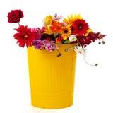 może kwiatów grata kolor żółty Obraz Royalty Free